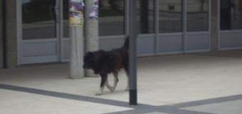 Hitno poduzeti mjere za uklanjanje agresivnih pasa sa ulica