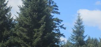 Danas se obilježava Svjetski dan zaštite šuma