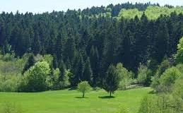 """Učenici OŠ """"Hašim Spahić"""" pošumljavanjem na Karašnici obilježavaju Svjetski dan šuma"""