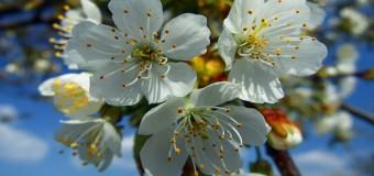 U 5.30 na sjevernu poluloptu stiglo je proljeće