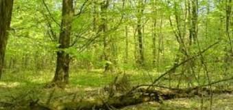Upozorenje o zabrani krčenja šuma