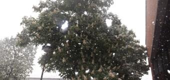 Snijeg pade na behar…