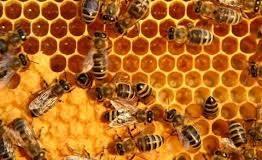 Objavljen Pravilnik o pčelarstvu u Federaciji  BiH